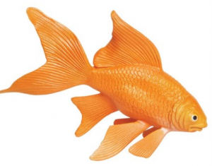 Animal Goldfish – XL - Safari-0